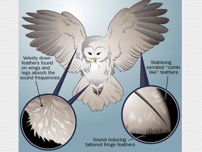תוצאת תמונה עבור owls biomimicry